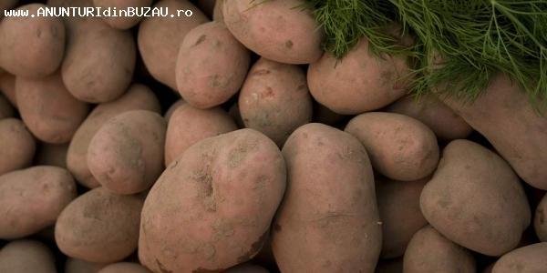 Cartofi de consum alb calitatea I