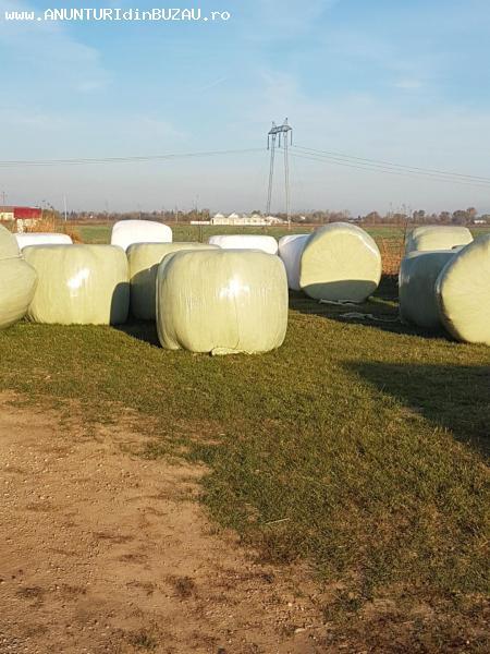 Vand baloti lucerna de 500kg  infoliati/neinfoliati