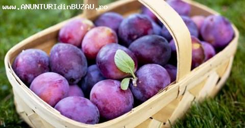 Vand prune direct din livada - 1 RON