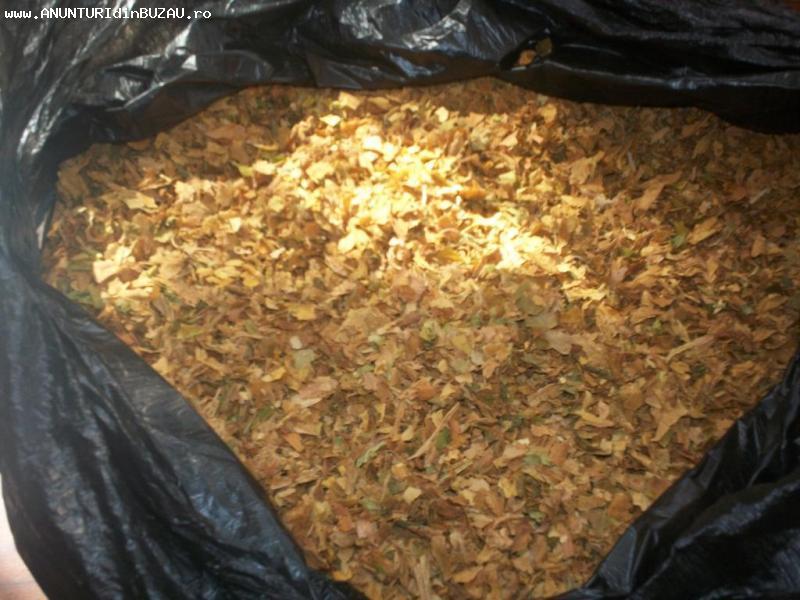 vand tutun tocat fără praf sau alte impurități la un preț av