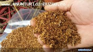 vand tutun cea mai buna calitate