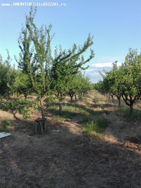 Livada pomi fructiferi