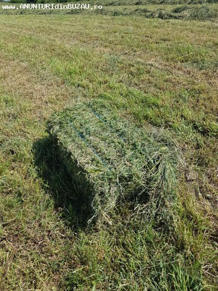 Schimb baloti de lucerna cu animale de ferma sau utilaje agr