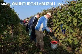 munca agricoltura treviso italia