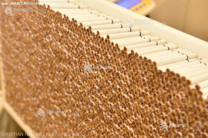 germania fabrica de tutun